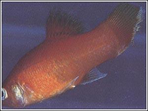 Nitrofurazone fish treatment levitra 10 mg opiniones for Fish tail fin